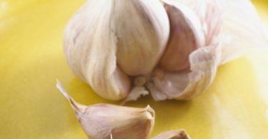 Garlic Cloves and Bulb bxp159797h