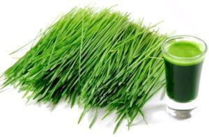 młody zielony jęczmień właściwości