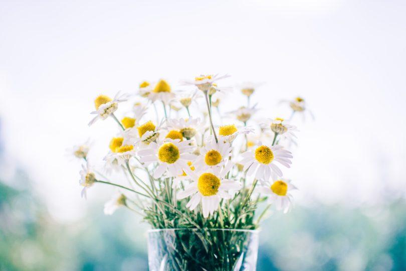 Jak Zadbać O Kwiaty Cięte Przedłuż Ich życie I Pozwól Na