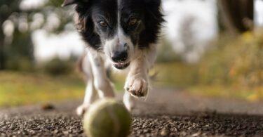 aktywne psy